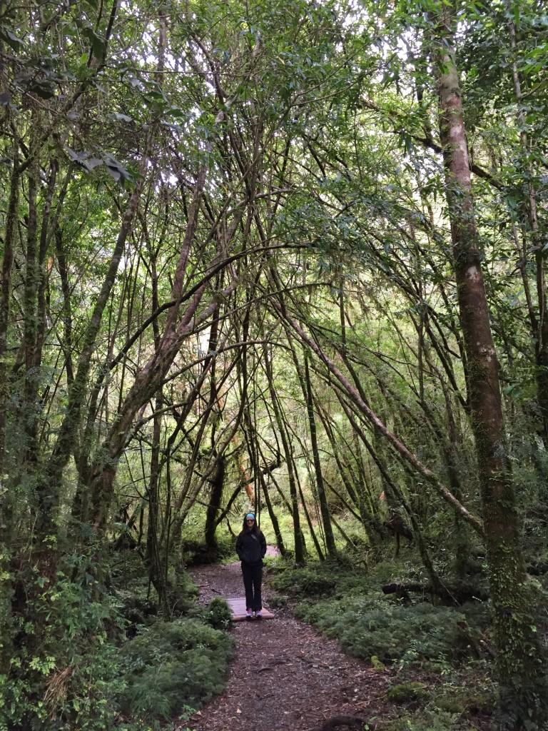 Alerce Andino National Park, Los Lagos Region, Chile