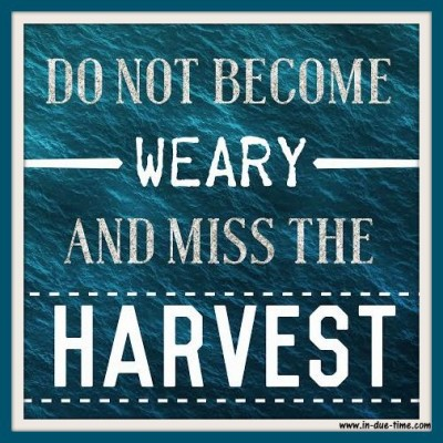 Do Not Becoming Weary - In Due Time Blog